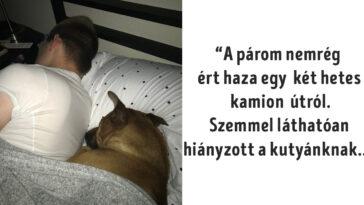 aranyos történet az emberek és állatok közti harmóniáról