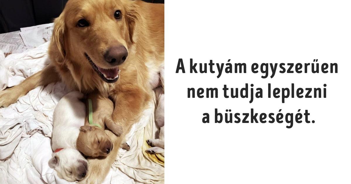 az állatok igenis gondoskodó élőlények
