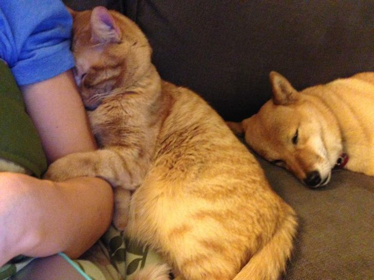 az állatok mindennél többre tartják a szeretetünket12