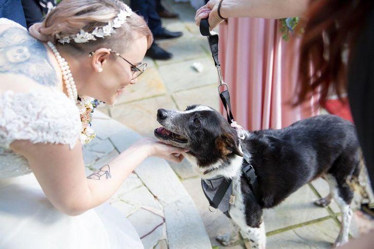 az állatok mindennél többre tartják a szeretetünket3