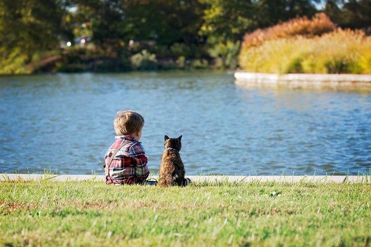 az állatok mindennél többre tartják a szeretetünket7
