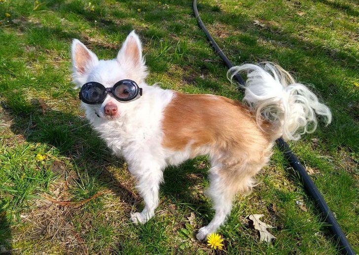 az idős kutyák szeretete nem halványul