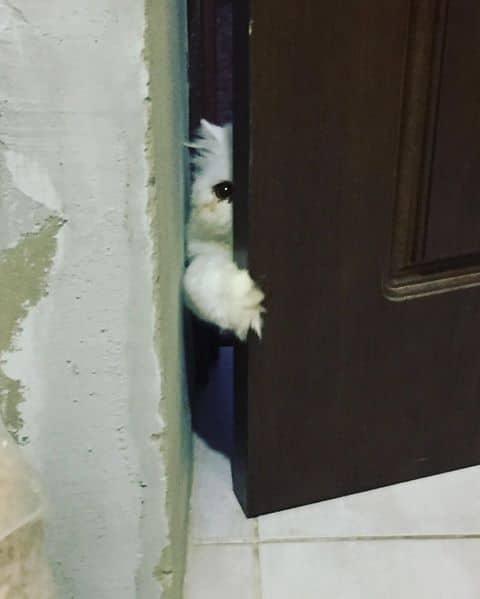 bajkeverő macskák1