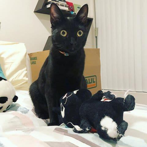 bajkeverő macskák10