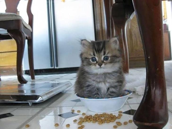 bajkeverő macskák11
