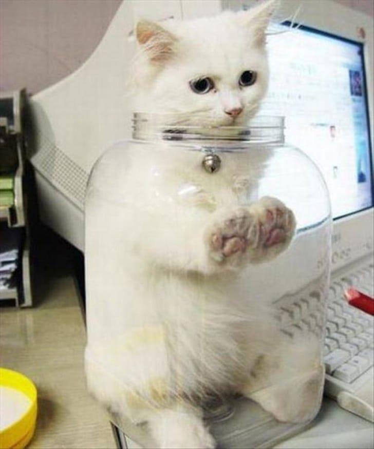 bajkeverő macskák2