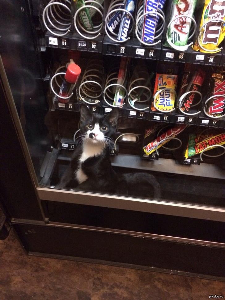 bajkeverő macskák4