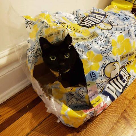 bajkeverő macskák8