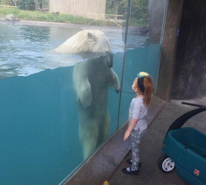 félelmetes állatok cukik14