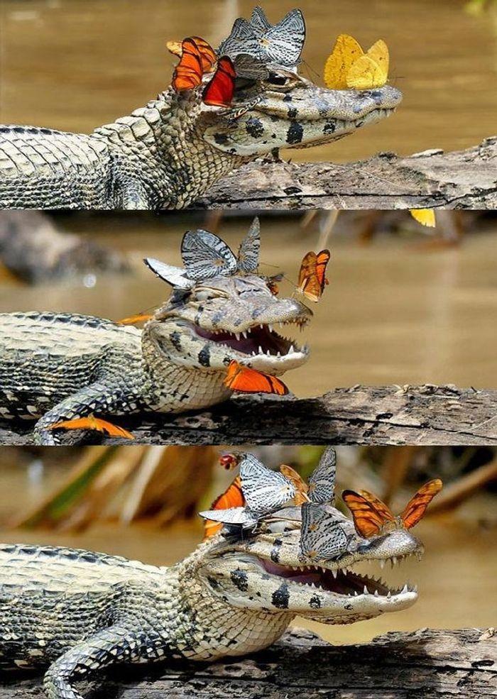 félelmetes állatok cukik15