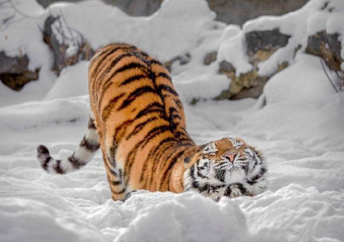 félelmetes állatok cukik5