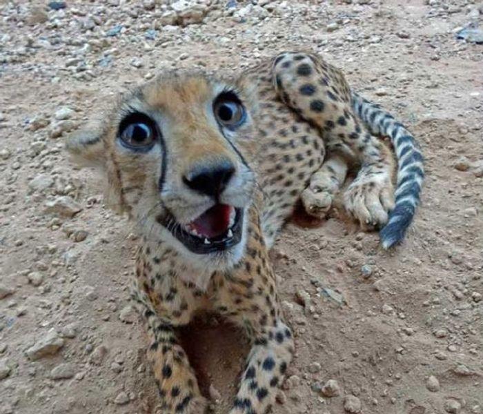 félelmetes állatok cukik7