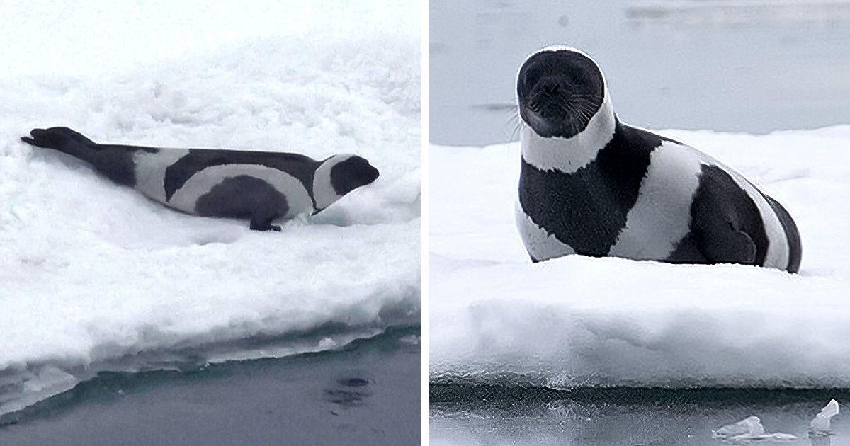 fekete-fehér állatok