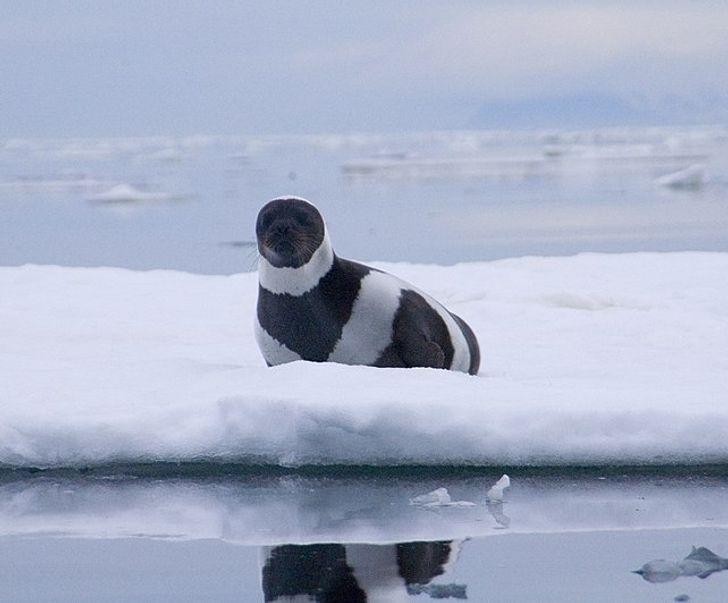 fekete-fehér állatok1