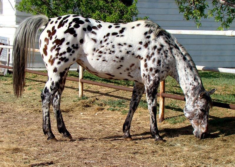 fekete-fehér állatok3