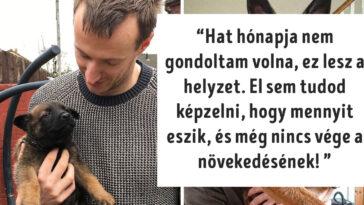 gazdi aki meglepődött, hogy mekkorára nőtt a kutyája