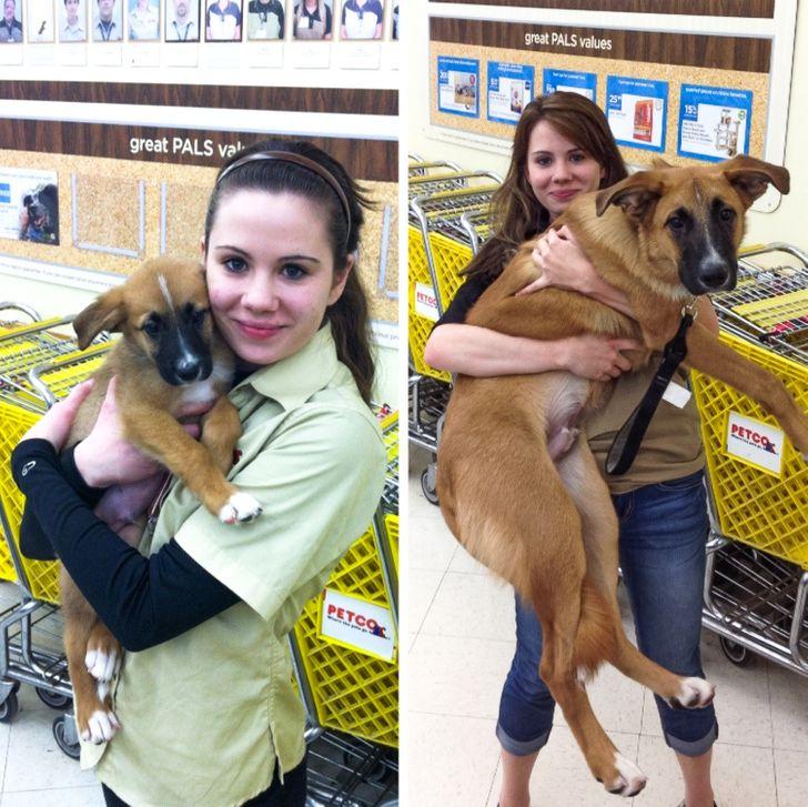 gazdi aki meglepődött, hogy mekkorára nőtt a kutyája3