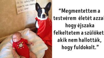 hősies kutyák