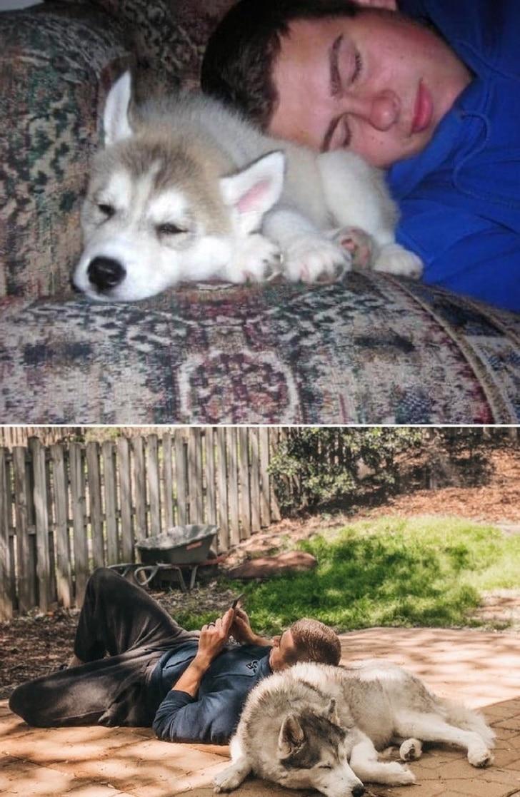 imádjuk a kutyákat2
