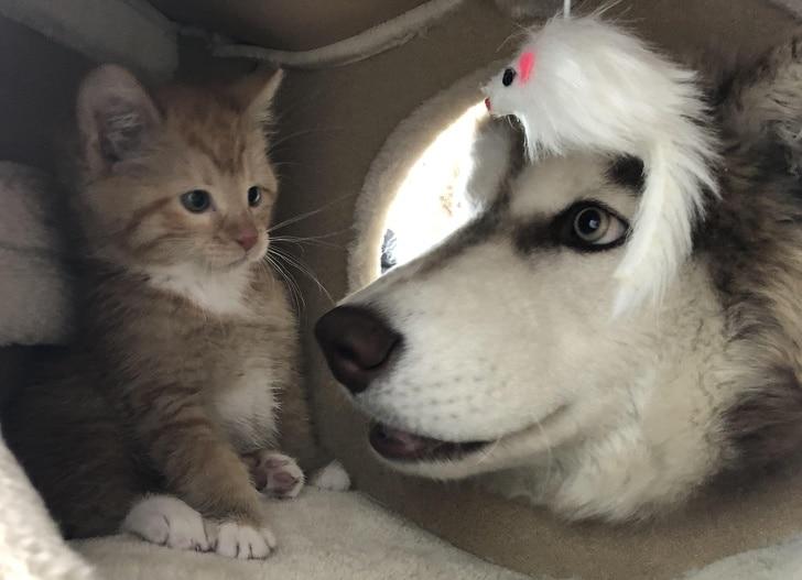 imádnivaló állatbarátok