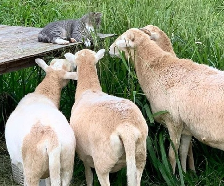 imádnivaló állatbarátok15