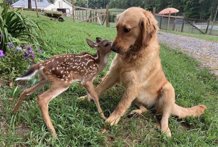 imádnivaló állatbarátok3