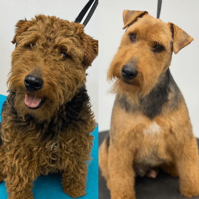 kutyák átváltoztak a kozmetikusnál
