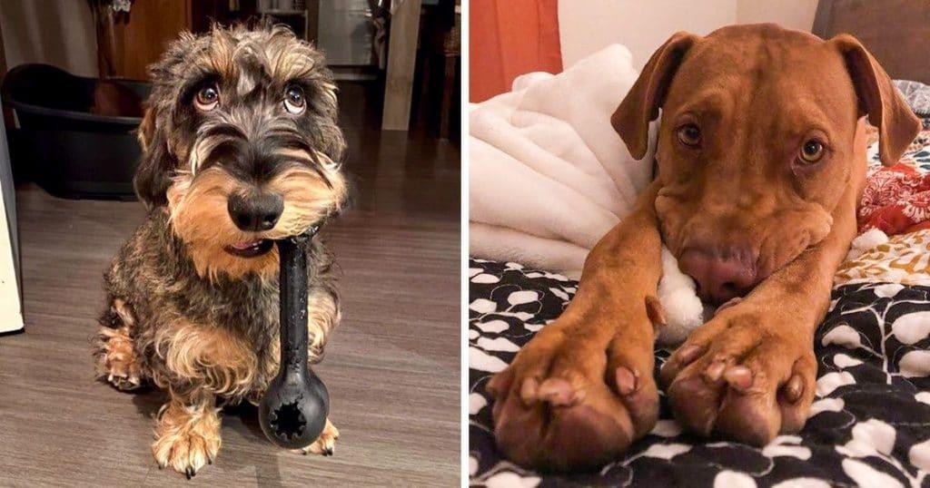 kutyák cukin néznek