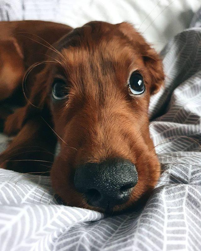 kutyák cukin néznek8