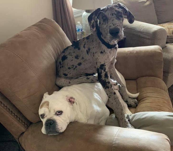 kutyák nem örülnek az új családtagnak