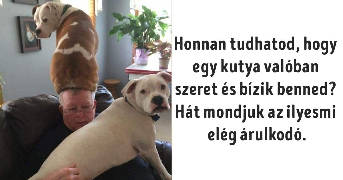kutyák nem hagyják unatkozni a gazdit