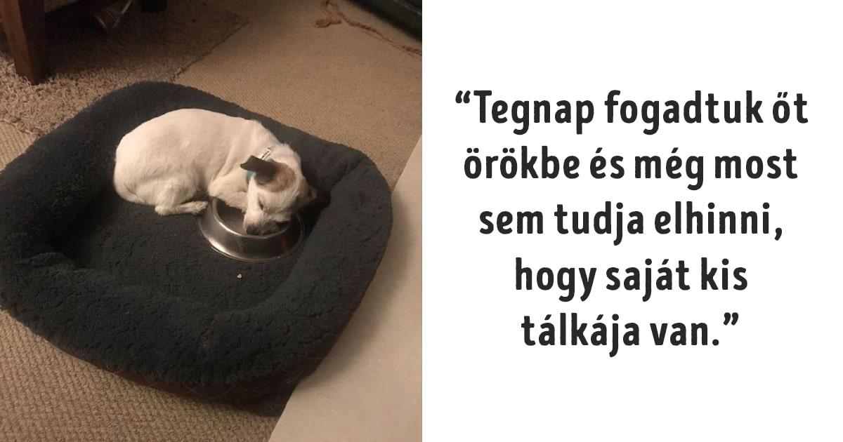 kutyák végre otthonra találtak