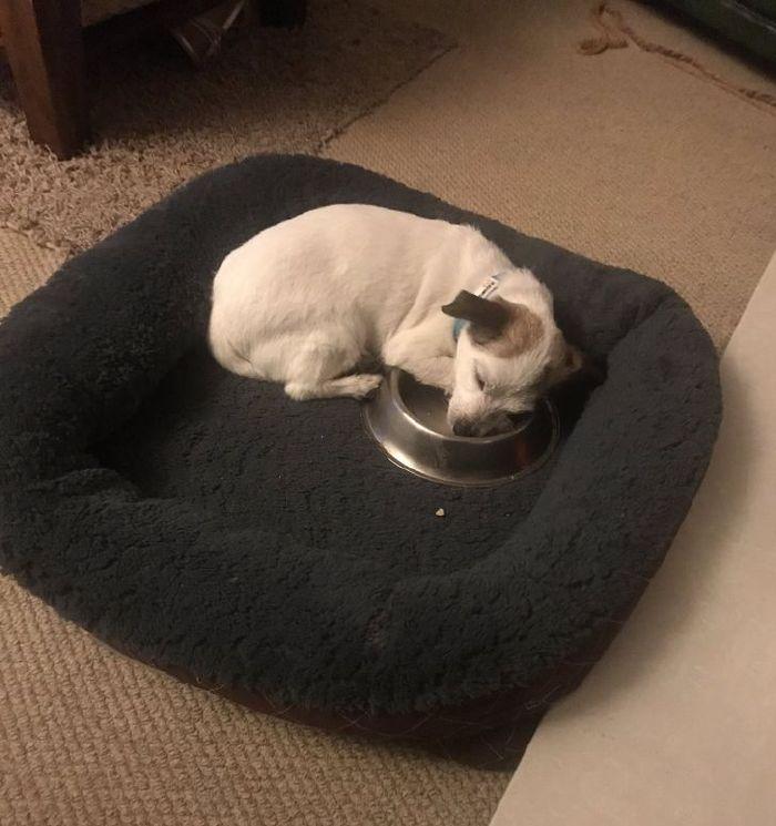 kutyák végre otthonra találtak12