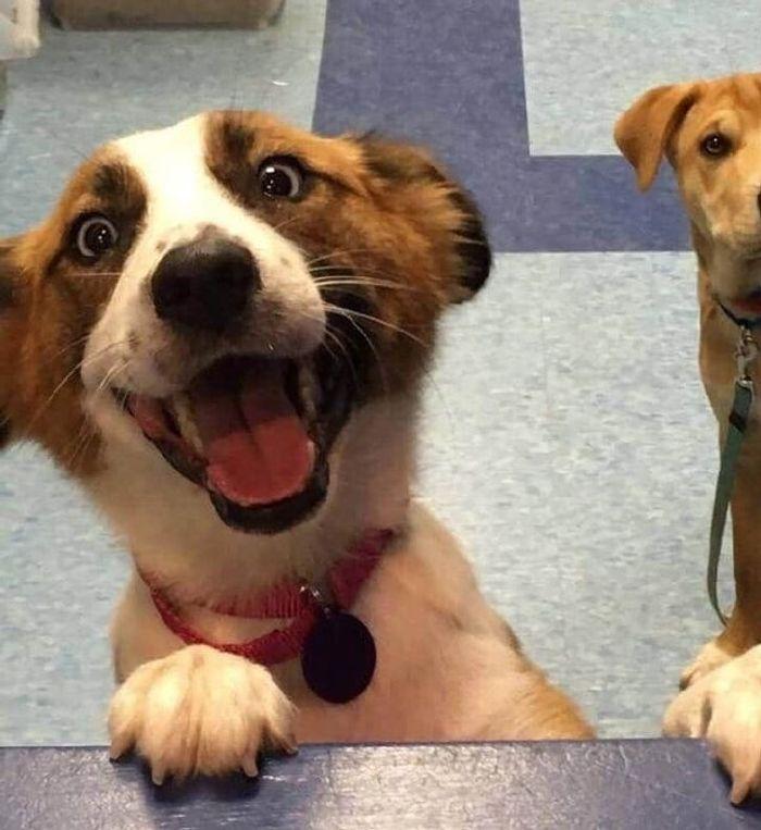 kutyák végre otthonra találtak2