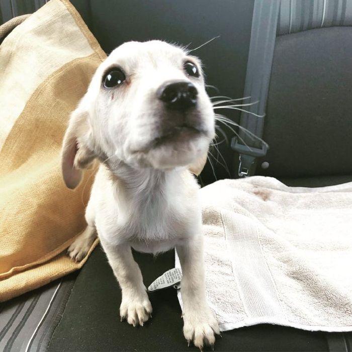 kutyák végre otthonra találtak7