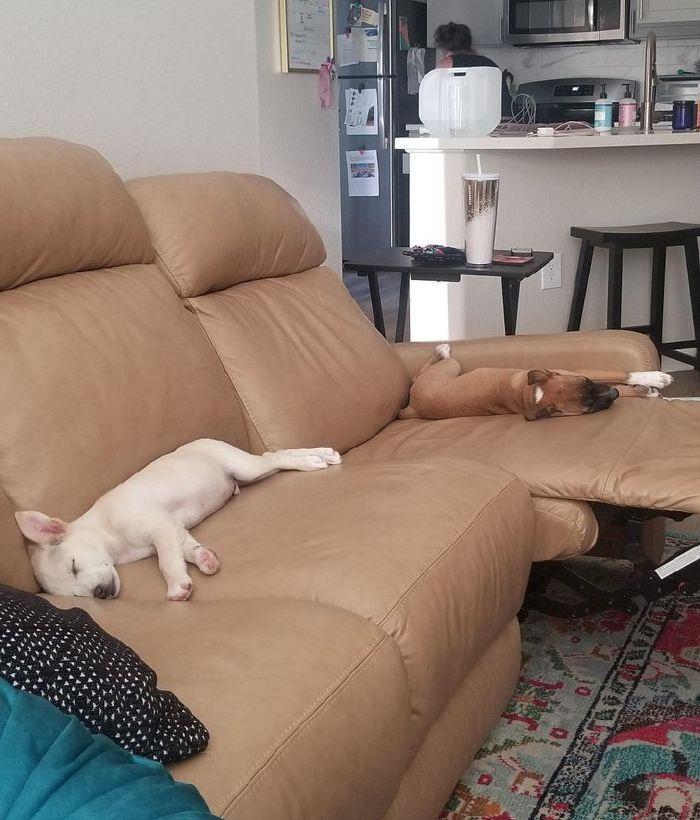 kutyák végre otthonra találtak9