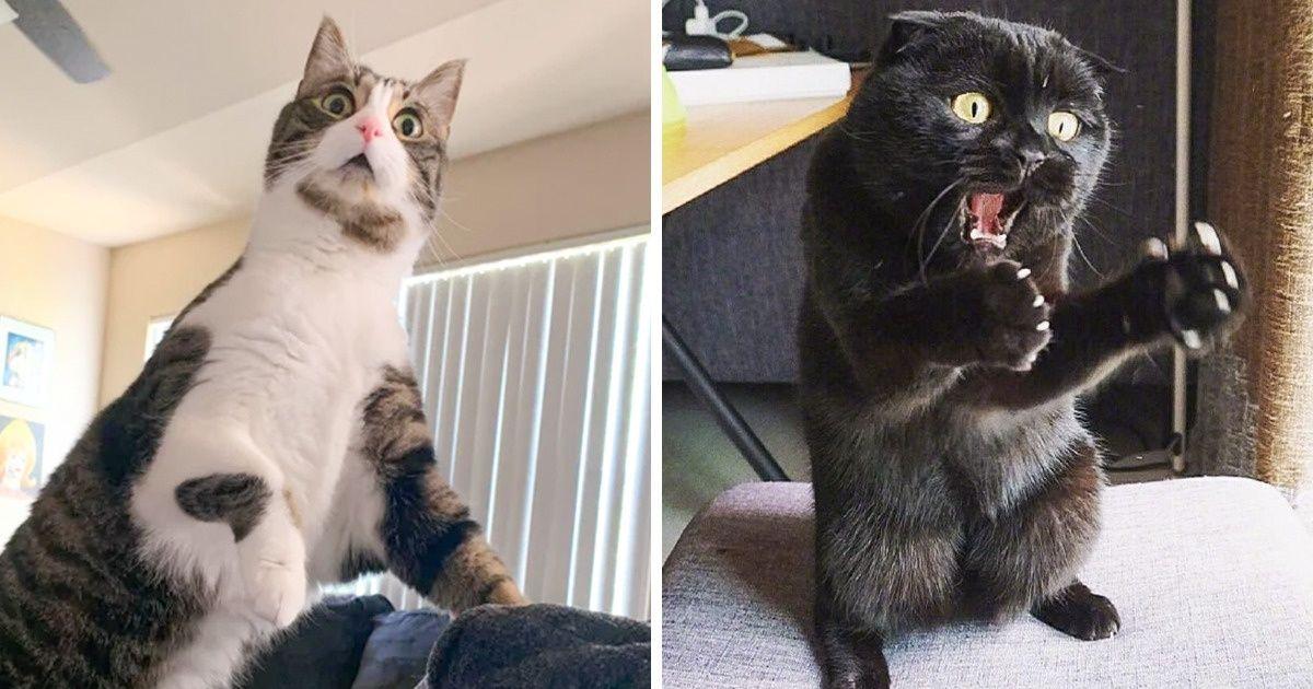 macskák mellett lehetetlen unatkozni