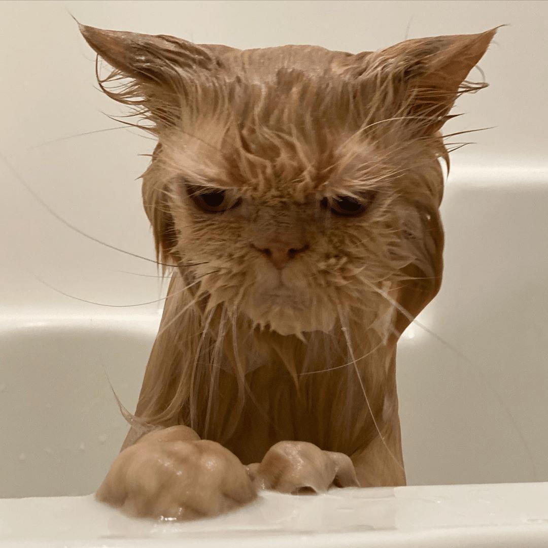 macskák mellett lehetetlen unatkozni12