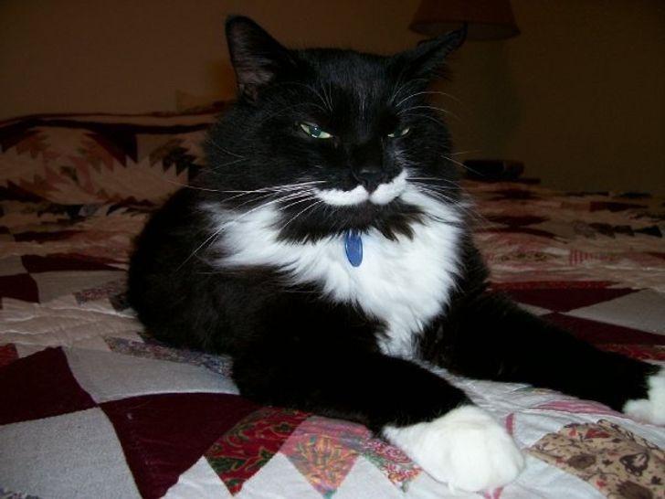 macskák mellett lehetetlen unatkozni16