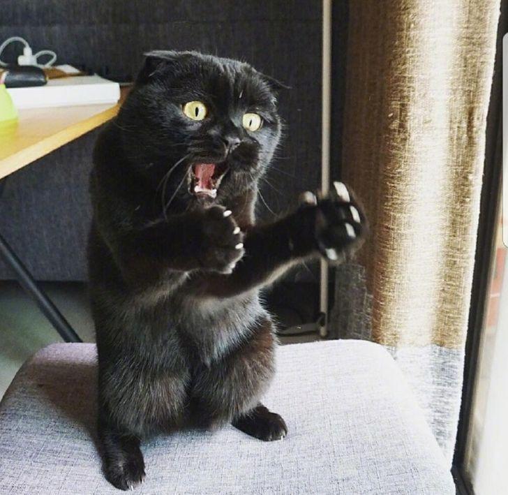 macskák mellett lehetetlen unatkozni9