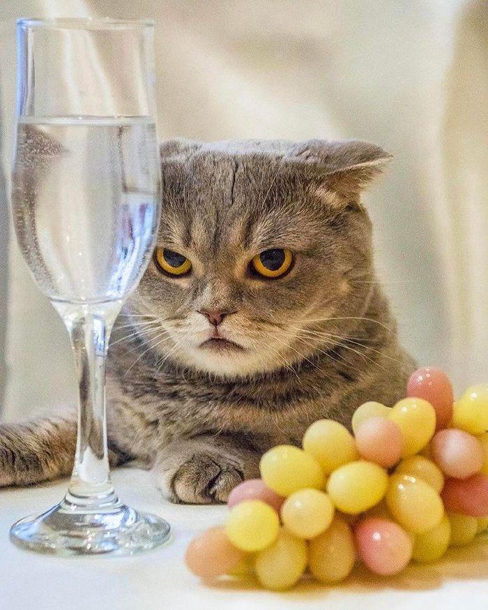 miért ne legyen macskád2
