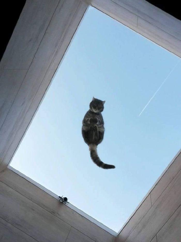 miért ne legyen macskád5