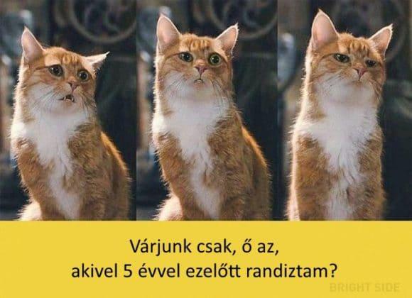 oscar díjas macskák1