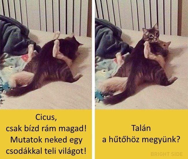 oscar díjas macskák10