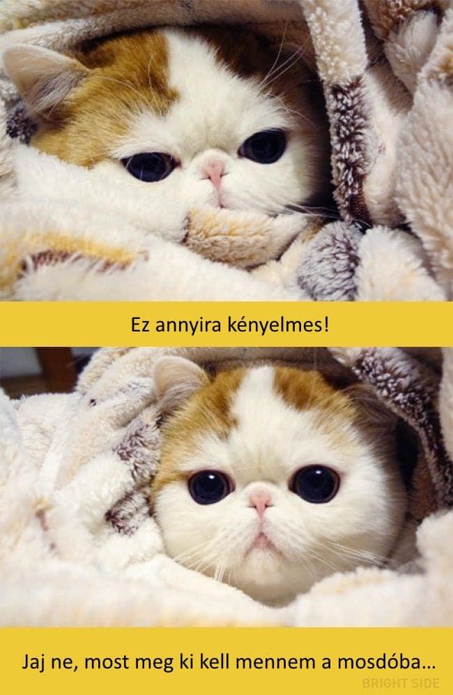 oscar díjas macskák11