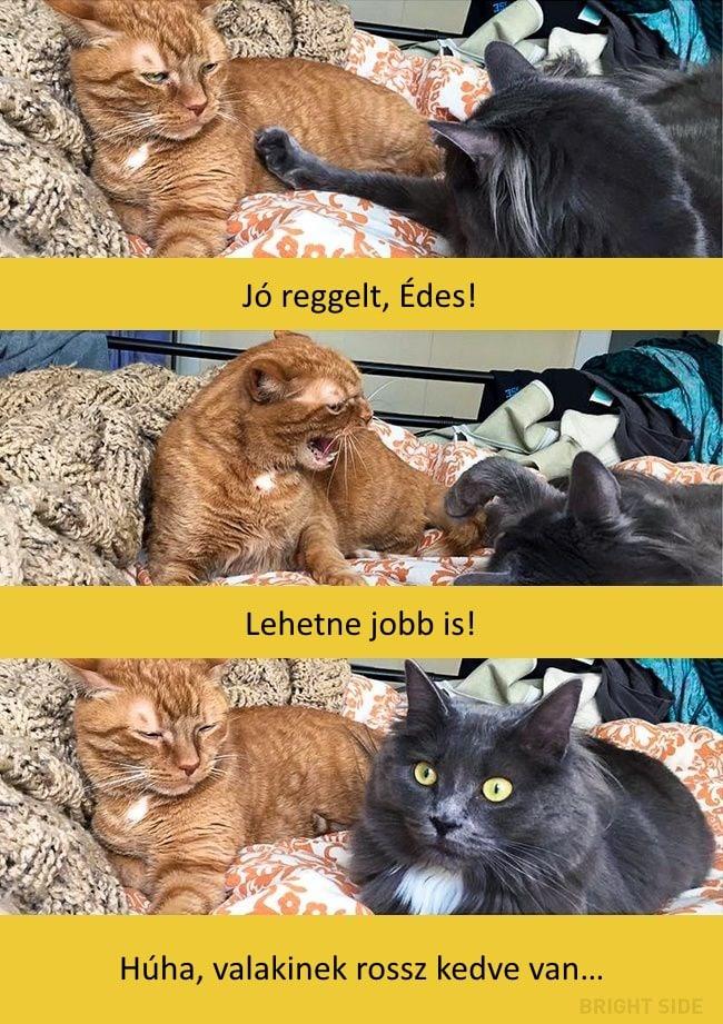 oscar díjas macskák13
