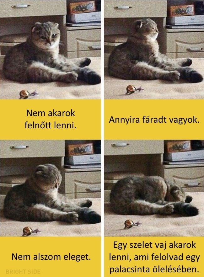 oscar díjas macskák14