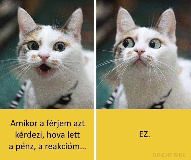 oscar díjas macskák15