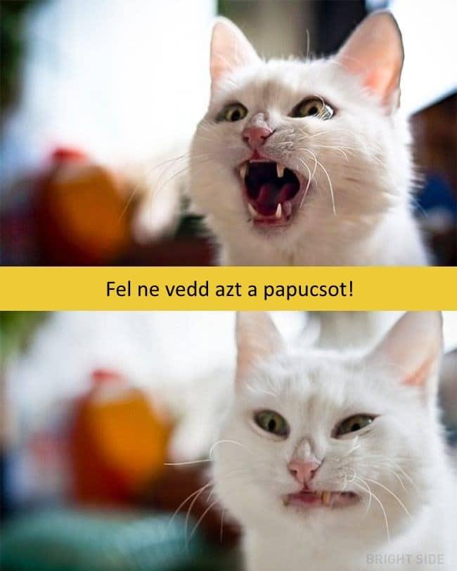 oscar díjas macskák3