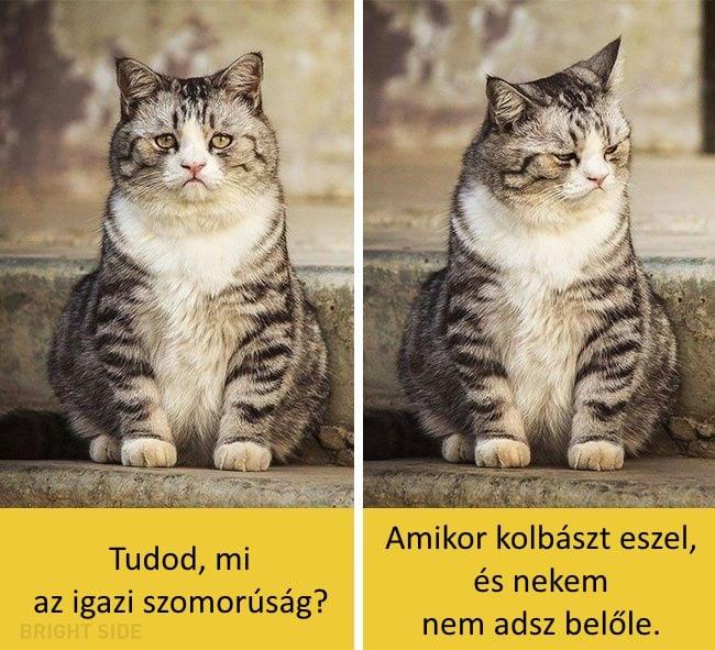 oscar díjas macskák4